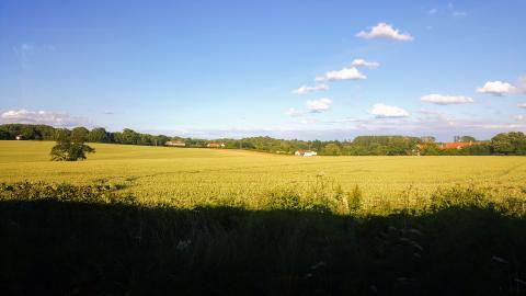 Anglian farmland