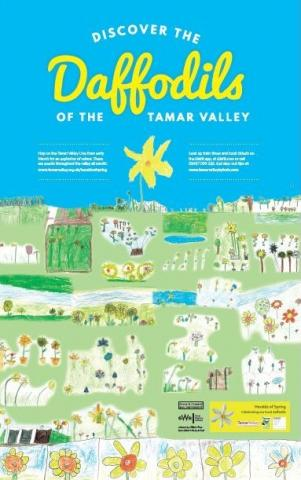 Discover the Daffodils of the Tamar Valley project
