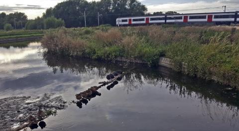 Train passing ducks perching on a river