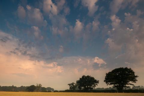 Explore Essex countryside