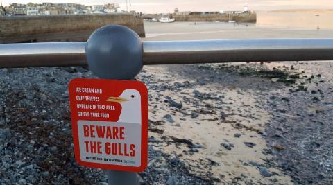 St Ives Gulls