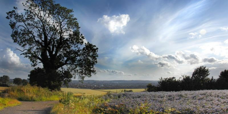 Luton countryside in the sunshine. Photo: Paul Gallimore from Pixabay