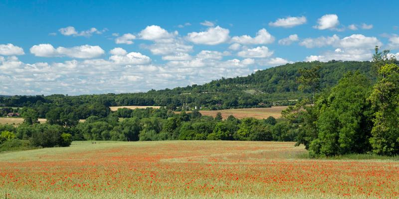Countryside views along the Darent Valley